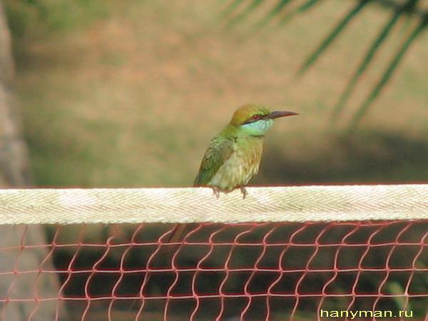 Птичка на сетке