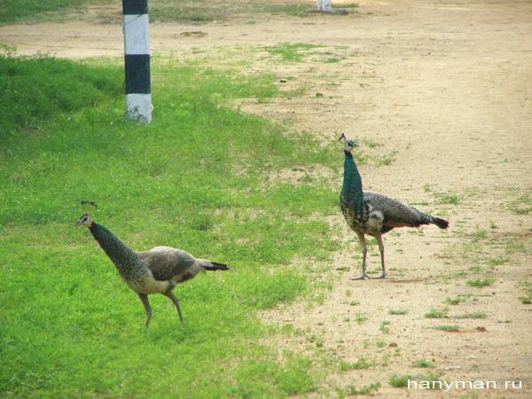 Царские птицы